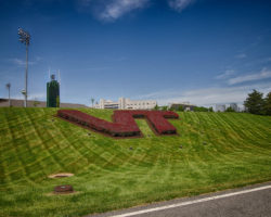 Virginia Tech Bushes - Rick Craig Photography